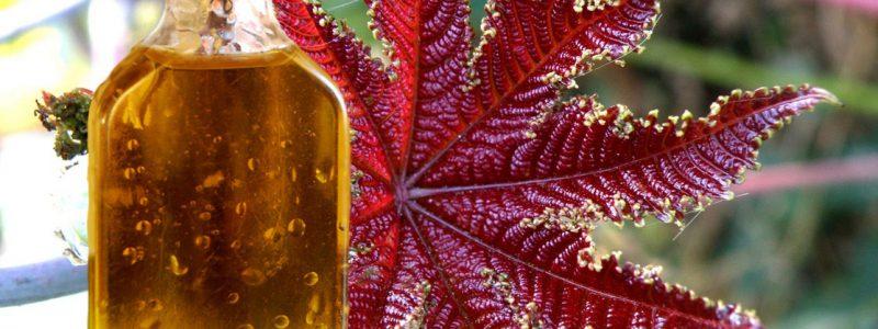 Касторовое масло от бородавок