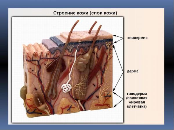 Вируксин от бородавок